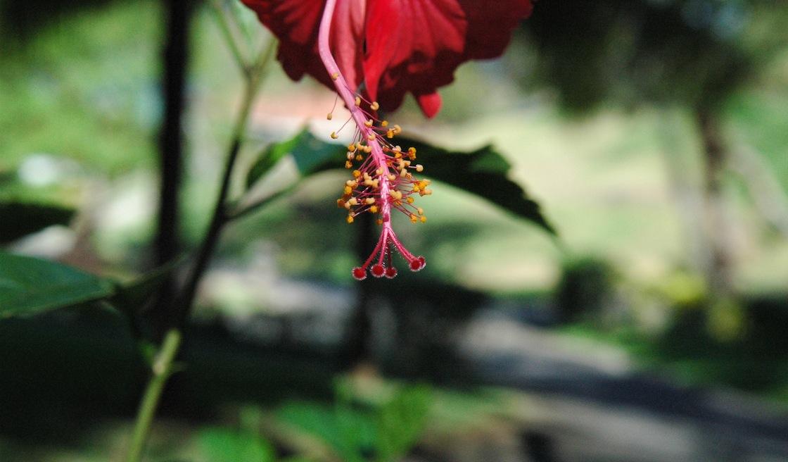 flowerStem_slide